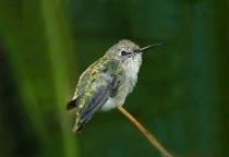Hummingbird Breaks