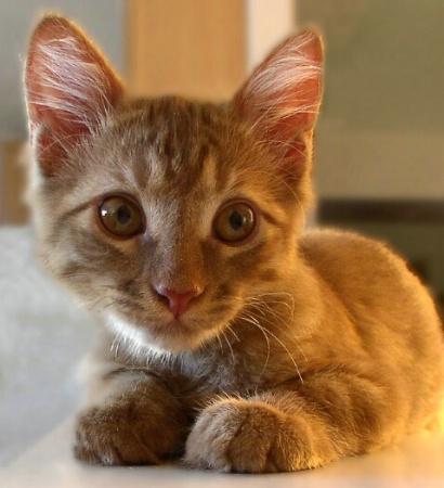 My Precious Kitten