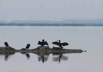 Salt Pans of Provence - Cormorants on Salt Pan