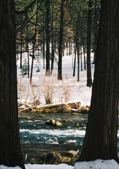Metolius River Woods
