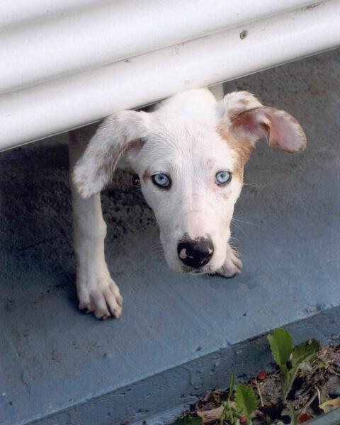 Dog Behind Blue Eyes