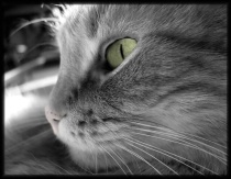 Bonus #2: Cat's Eye in Black & White