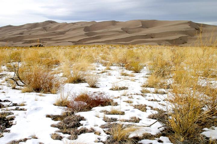 Great Sand Dunes/humble cacti