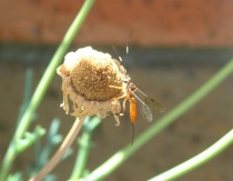 Insect on dead flower