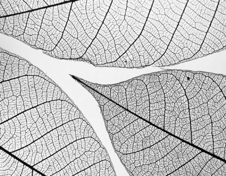 A puzzle of leaves