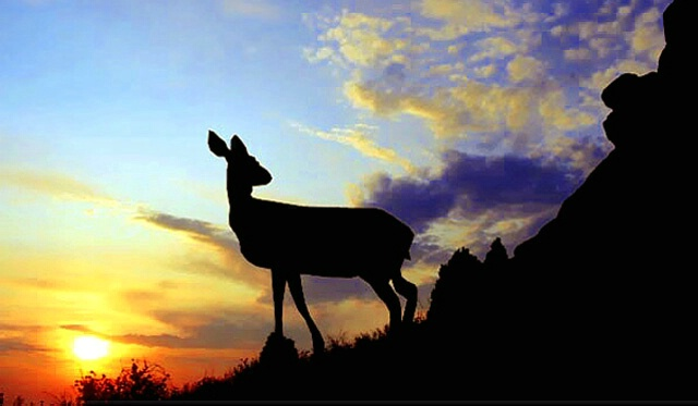 Deer Silhouette