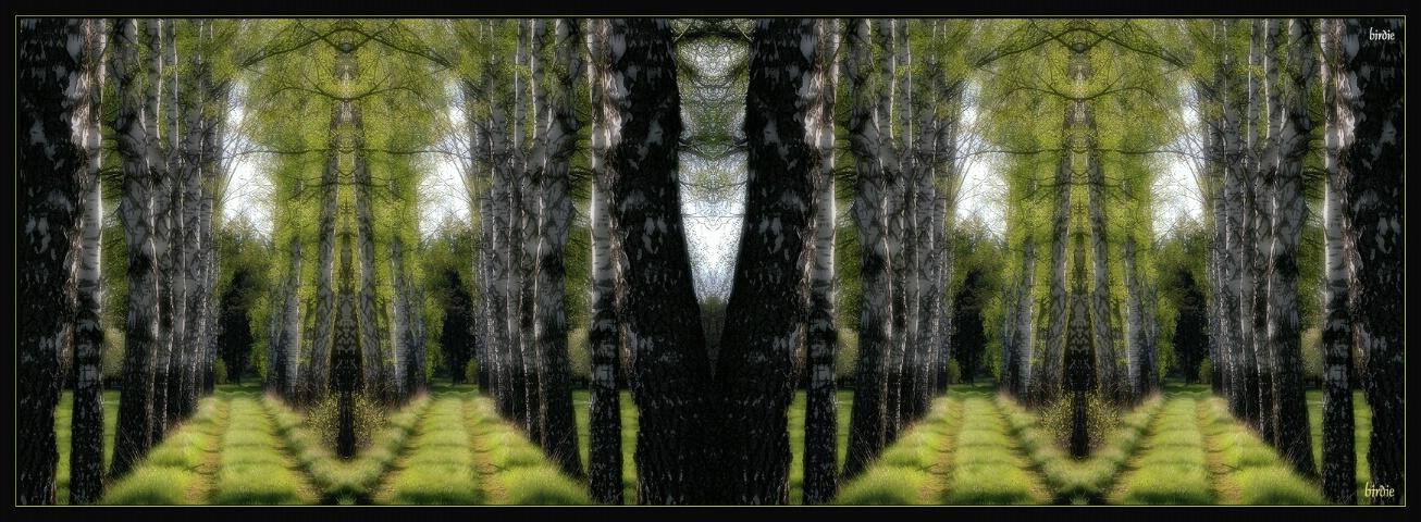 Birch maze