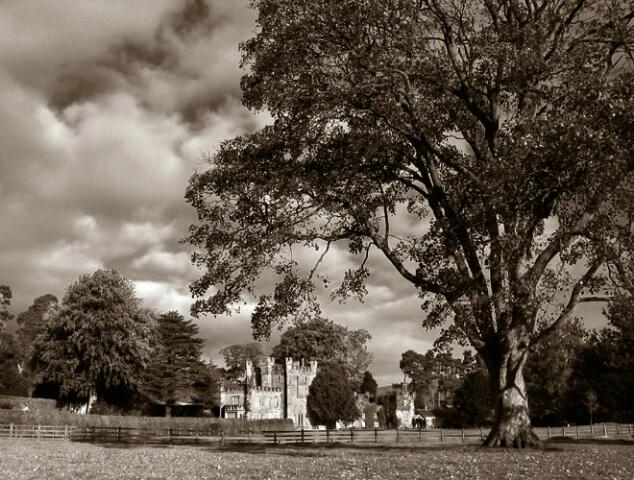 Manor, Tree and Sky