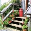 Geranium Steps