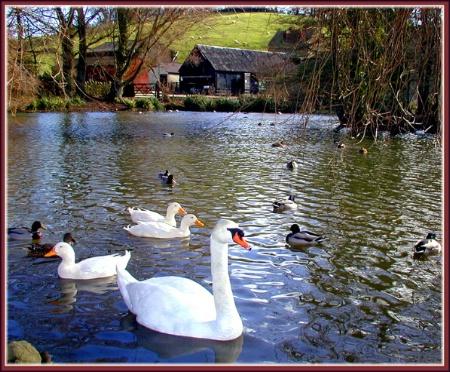 Abbotsbury Pond #2