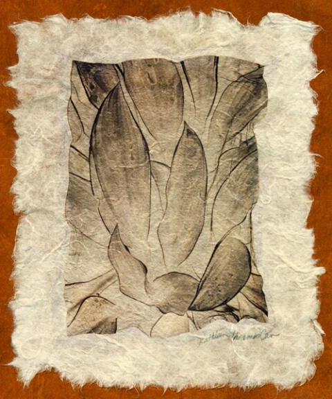 Leaves (negative on handmade paper)