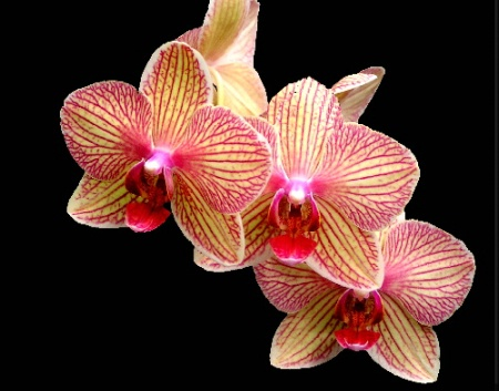 Lovely Orchid