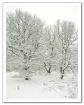 First Snow (light...