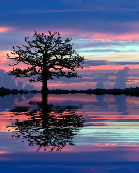 Reflected Silhouette