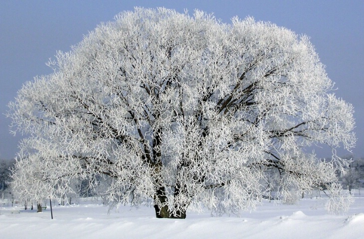 Jack Frost Pays a Visit.