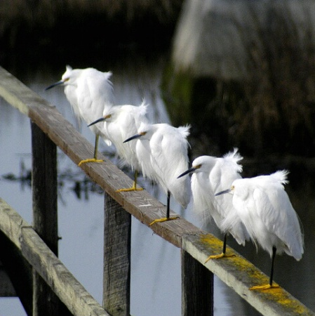 egret slumber party