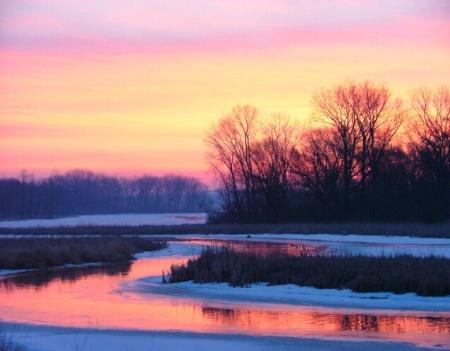 Marsh in Pink