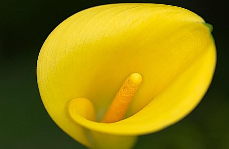 Yellow#2