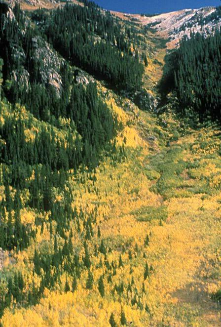Fields of Gold & Green  #1697 - ID: 317610 © Shirley  Scott