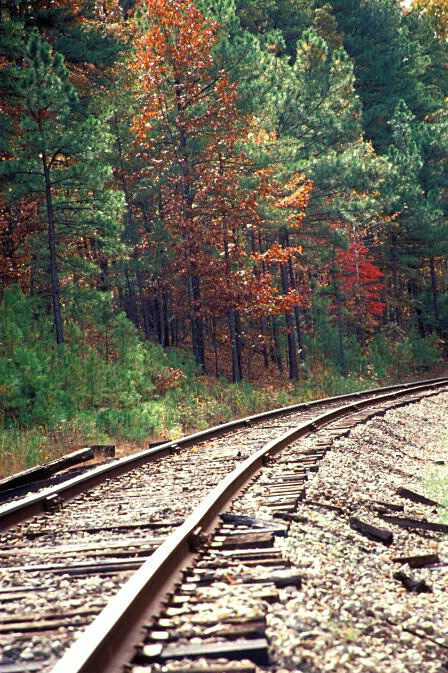 Foliage & Train Tracks  #2255 - ID: 317790 © Shirley  Scott