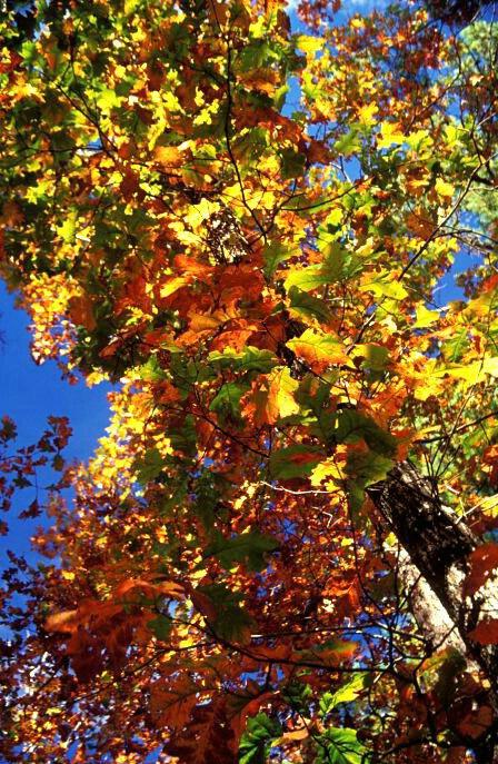 Colorful Kaleidascope  #2242 - ID: 317792 © Shirley  Scott