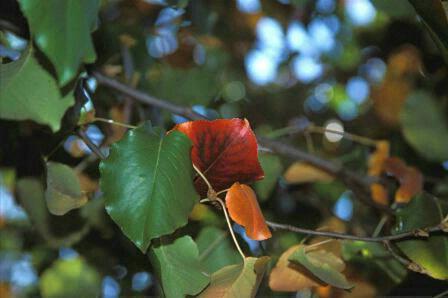 Solo Red  #1842 - ID: 317802 © Shirley  Scott