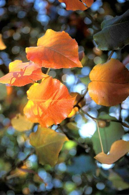 Orange Cluster  #1841 - ID: 317804 © Shirley  Scott