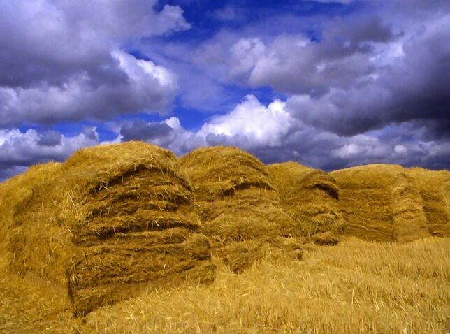 Sun baked loaves of bread - ID: 318458 © Jim Kinnunen
