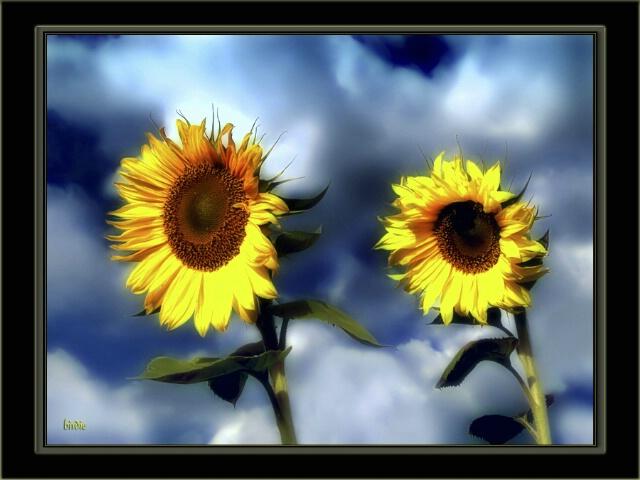Sun-collectors
