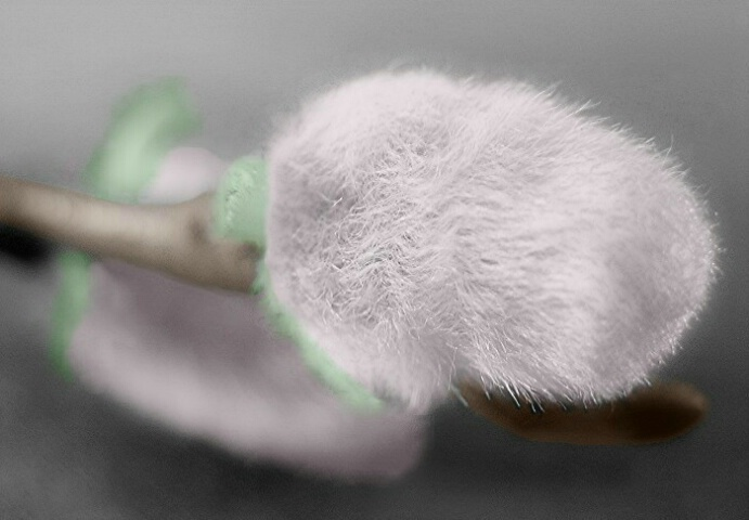 Springs Cotton Candy