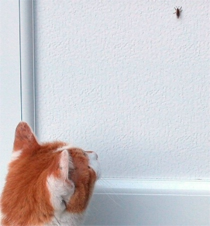 My Pointer Cat