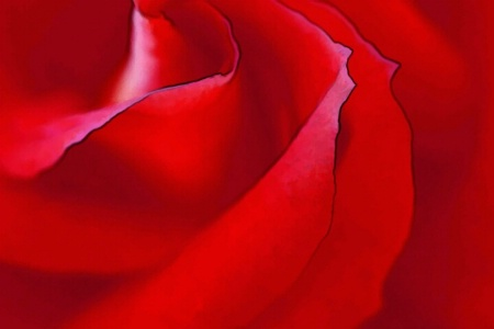 Glory Rose