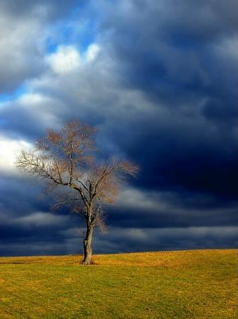 Solitary Tree #2