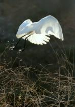 Egret Escape