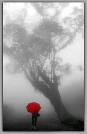 Walking in the fog...