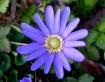 front yard flower