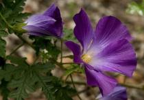 Starry Bloom