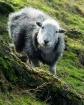 Little Fluffy Clo...
