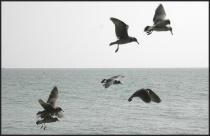 Flying Companions