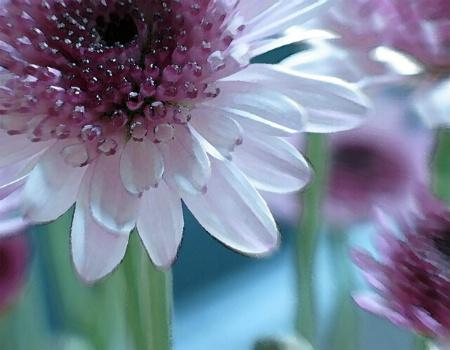 Cut Flowers (2)