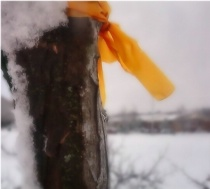 The Ribbon In the Snow