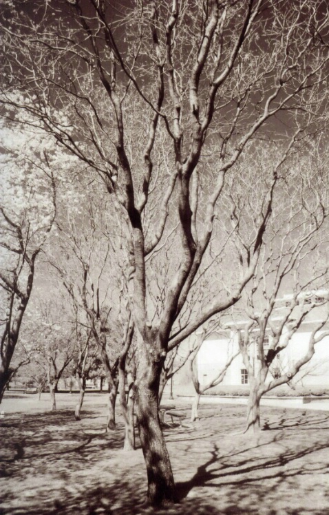 Trees Bare