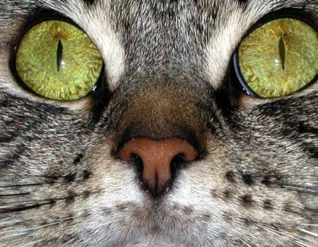 A Mouse Eye View
