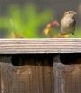 Backyard Birdie