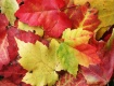 Fall Color - Best...