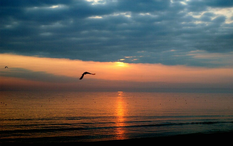 morning flight over the chesapeake