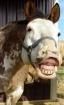 Smile pretty for ...
