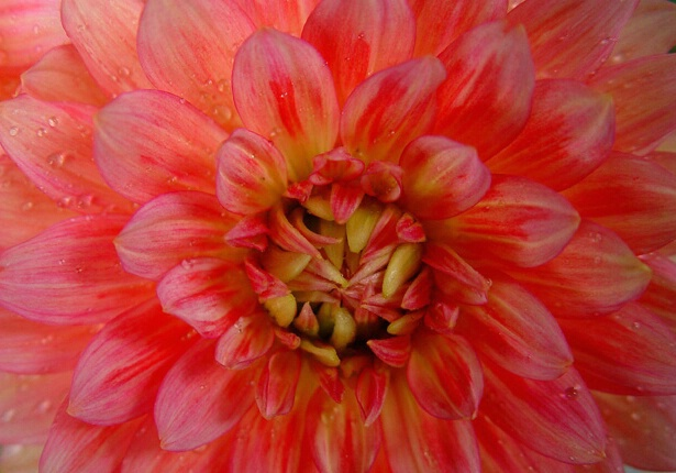 Chinatown Flower - ID: 361765 © Virginia Ross