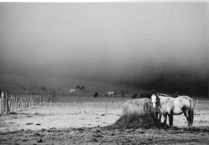 As the fog rises. . .