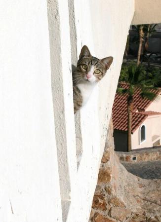 Cabo Kitty